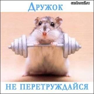 http://www.forest-club.narod.ru/dr.jpg